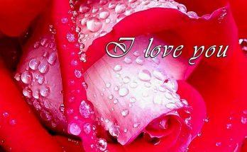 Te regalo una Rosa imágenes
