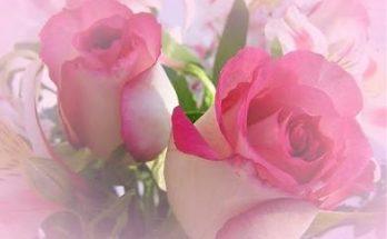 Rosas del Amor imágenes