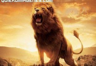 El leon de Narnia imágenes