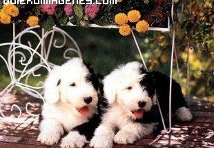 Cachorritos de perro imágenes