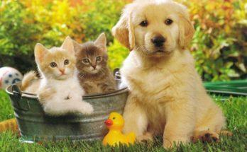 Un perro con dos amigos imágenes