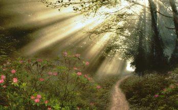 Dios ilumina los caminos imágenes