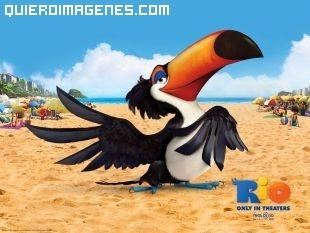 El tucán Rafael de la pelicula Rio imágenes