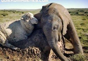 Maravillas del mundo animal imágenes