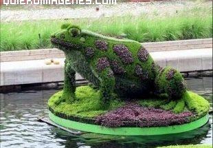Rana vegetal imágenes