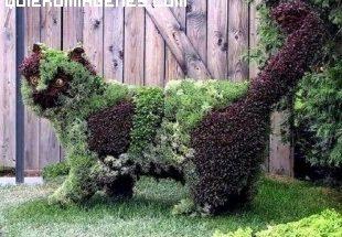 Escultura vegetal de un lince imágenes