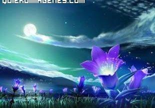Flores que lucen en la oscuridad imágenes