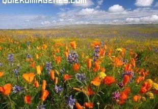 Campo en primavera imágenes