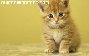 Precioso gatito imágenes