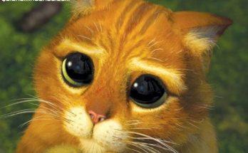 Un lindo gatito en Shrek imágenes