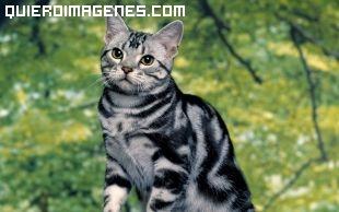 Imagen de gato ilustre imágenes