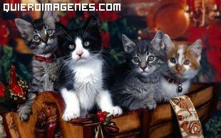 Gatitos navideños imágenes