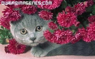 Gato escondido imágenes