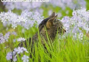 Imagen gato entre la hierba imágenes