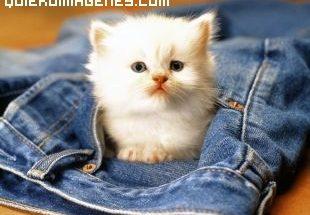 Imagen de gato de bolsillo imágenes