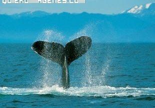 Imagen de inmensión de ballena imágenes