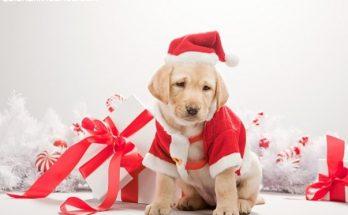 Un cachorro navideño imágenes