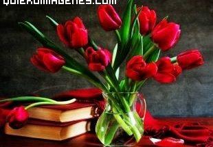 Ramo de tulipanes rojos y libros imágenes
