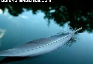 Pluma en el agua imágenes