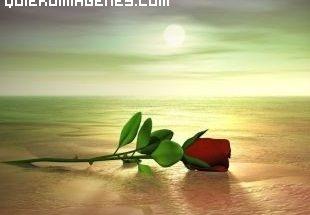 Imagen de Rosa imágenes