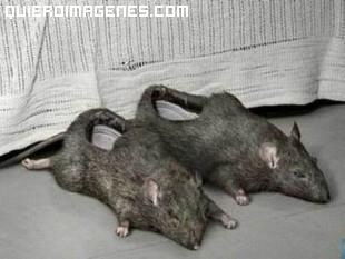 Zapatillas modelo ratas imágenes