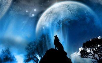 El lobo y la luna imágenes