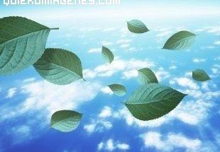 Imagen fantástica de hojas imágenes