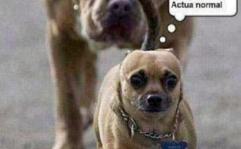 Perro asustado imágenes