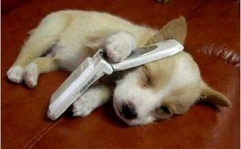 Cachorro hablando por teléfono imágenes