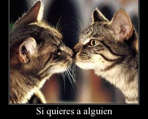 Gatitos dándose un beso imágenes