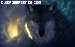Lobo desafiante imágenes