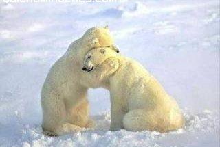 Abrazo animal imágenes