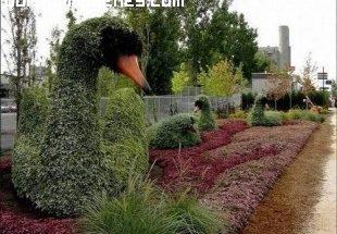 Precioso cisne vegetal imágenes