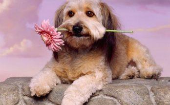 Perro con flor imágenes