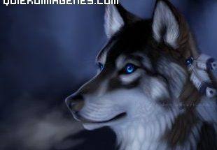 Perro de nieve con ojos azules imágenes
