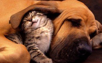La amistad son hechos imágenes
