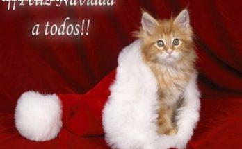 Felicita la navidad con este lindo gatito imágenes