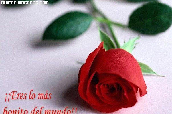 Díselo con una rosa imágenes
