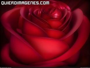Aterciopelada rosa color rojo pasión imágenes