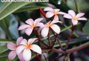 Ramillete de flores imágenes