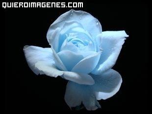 Rosa azul sobre fondo negro para decir te quiero imágenes