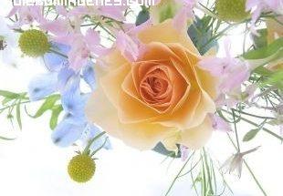 Encantadora rosa imágenes
