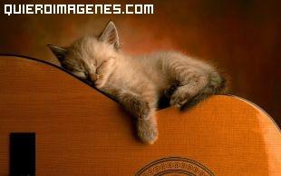 Durmiendo imágenes
