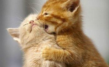 Un besito gatuno imágenes