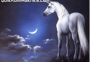 Unicornio blanco imágenes