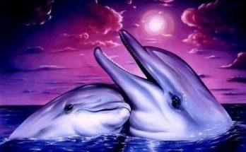 Abrazo entre delfines imágenes