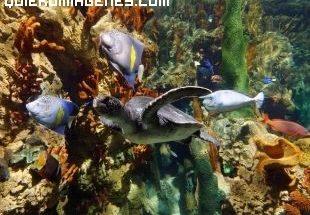 Colorido acuario imágenes
