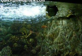 Algas y peces imágenes