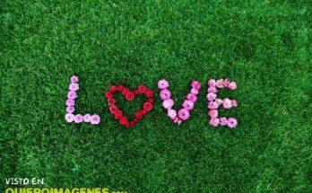 Amor con rosas imágenes
