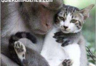 Babuino con gato imágenes